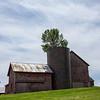 Tree in silo -North Hero, Vermont