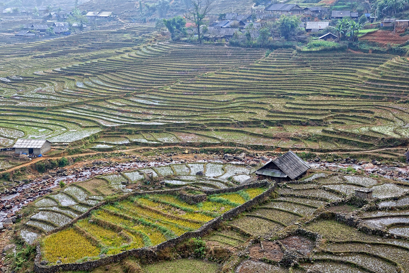 rice terrace at Sapa