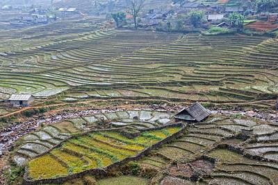 rice terrace at Sapa