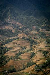 Terraced Hillside - Sapa