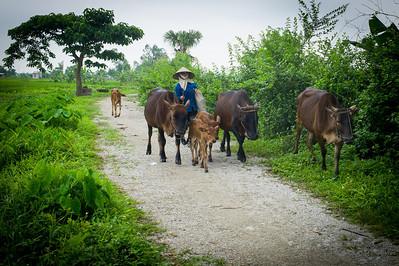 Ninh Binh Farmer