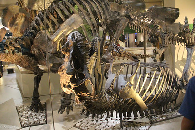 SMithsonian Museum of Natural History .. Dinosaurs!