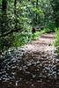 10  Falls Trail blossom fall