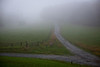 Foggy fork off the Blue Ridge Parkway...