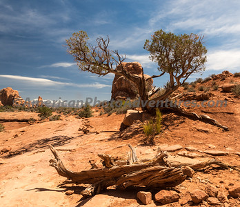 Arches NP_20130429_0244