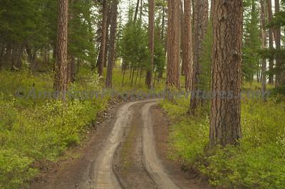 Found an old logging road, Glacier.