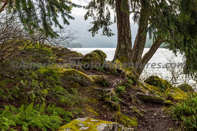 OlympicNP_0235