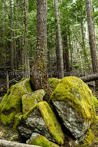 OlympicNP_0376