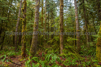 OlympicNP_0243