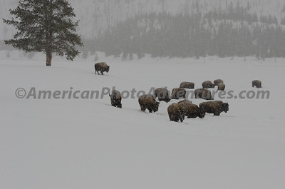 Yellowstone2012_0118