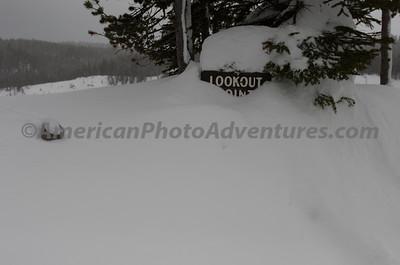 Yellowstone2012_0248