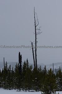 Yellowstone2012_0050