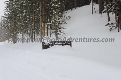 Yellowstone2012_0291