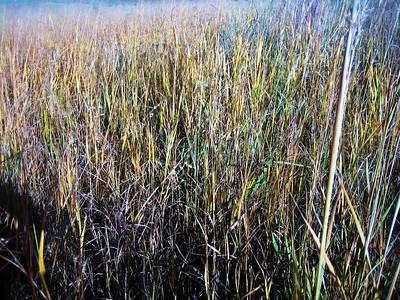 Autumn Grasses.JPG