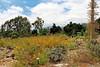 Semi-arid Landscape