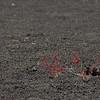 @ Sunst Crater