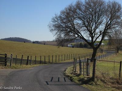 Custer Road