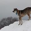 Dog. On snowpile.