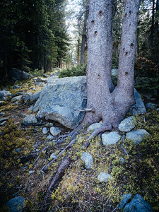 Wind River Trek, Shoshone National Forest