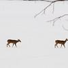 Deers crossing the lake