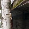 Tree & Cabin