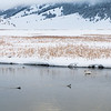 Birds on Flat Creek