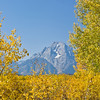 TRWY-8018: Late September in Teton NP