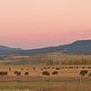TRWY-8024: Buffalo herd in the Tetons