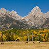 TRWY-8026: Horse ranch in the Tetons