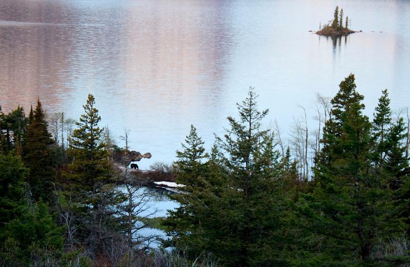 A Bear at Goose Island, Glacier NP