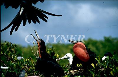 Barbuda Caribbean