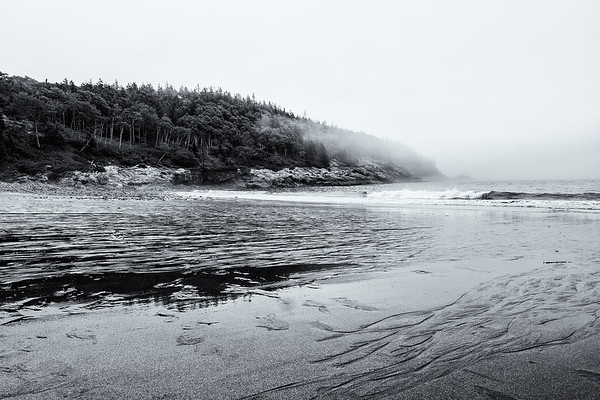 Fog Along Acadia's Shore