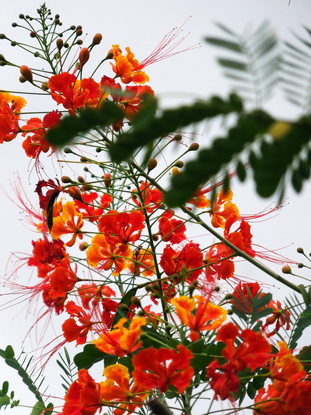 Sri Lankan Flowers