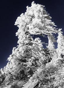 """""""Ice Tree"""""""