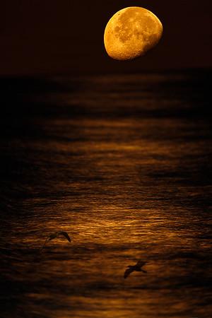 Moonrise on Ocean