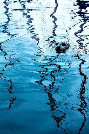 Seal_15-1