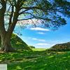 Sycamore Gap Hadrian's Wall