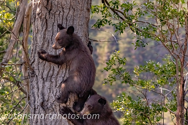 Scared Cubs