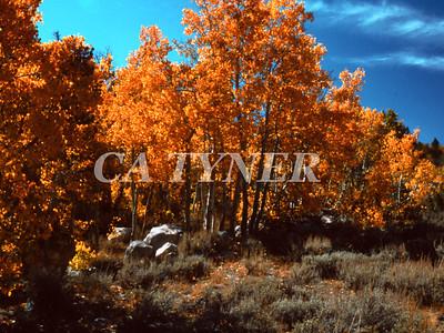 Eastern Slope Serra Nevada California