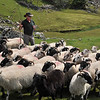 The owner of Kissane Sheep Farm in Kenmare, Ireland, gives a demonstration of how he herds his livestock.