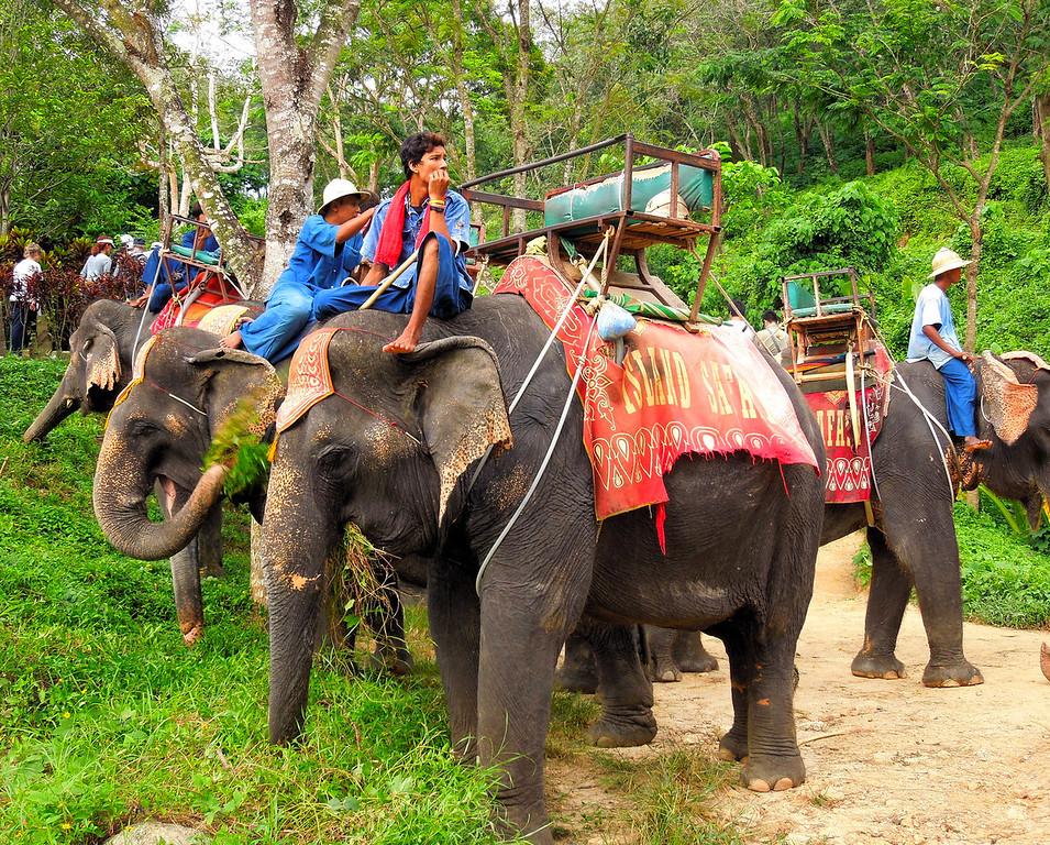 Elephants and Mahouts