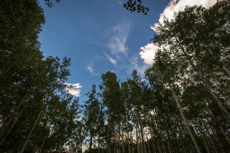 Tree Line Utah