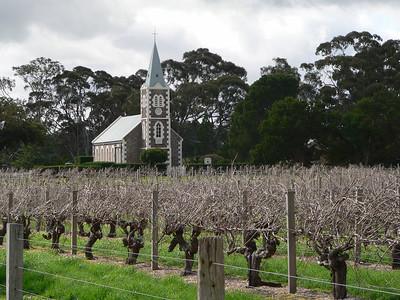 Very old Syrah vines in the Hill of Grace vineyard, Barossa Valley, Australia. Panasonic FZ20.