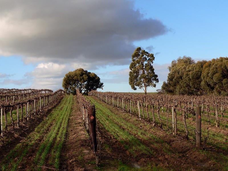 Clouds over vineyard in Australia. Panasonic FZ20.