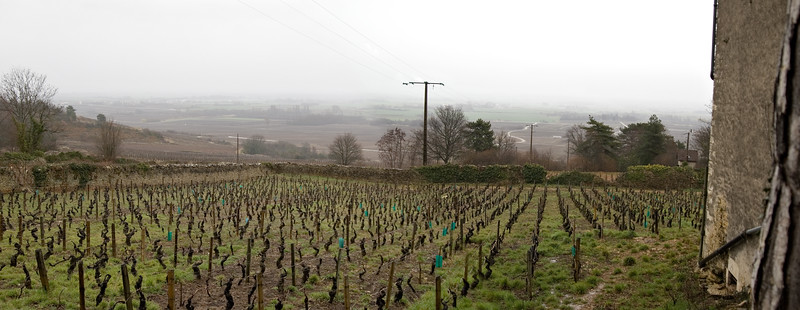 Vineyards come up to the house of Domaine Comtesse Bernard de Cherisey in Puligny-Montrachet, Burgundy.