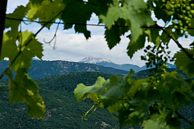 A view of the Alps through grape vines in the Alto Adige wine region of Italy.