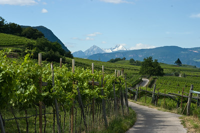 Vineyards and the Alps in the Atlo Adige wine region of Italy.