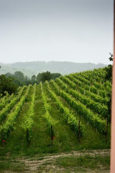 Vineyards at Tenuta I Quaranta in the Asti wine region of Piedmonte, Italy.
