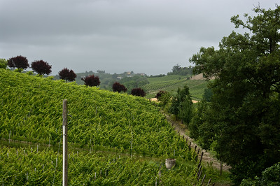 Clouds, rain and mist are a part of the Tenuta I Quaranta vineyards in the Asti wine region of the Piedmont in Italy.