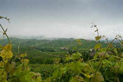 Nebbia; the mists of the Piedmont, from which Nebbiolo gets its name as seen from the Pier winery in Barbaresco.